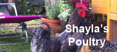 Shayla's Poultry